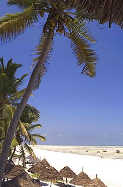 Thatched beach umbrellas on the beach at Paje, Zanzibar, Tanzania, East Africa, Africa