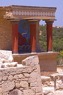 The north entrance passage containing a fresco of a charging bull at the Minoan site of Knossos, excavated in the early 20th century by British archaeologist Sir Arthur Evans, Crete, Greek Islands, Greece, Europe