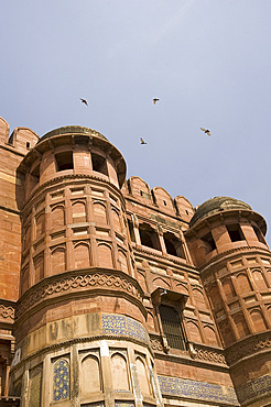 Birds flying around the towers of the Agra Fort, UNESCO World Heritage Site, Agra, Uttar Pradesh, India, Asia