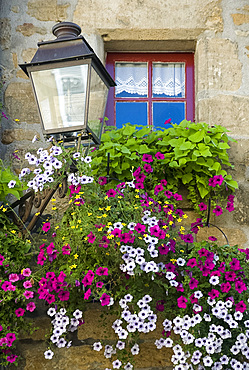 Purple petunias cascading from a window box in front of an old window in Sarlat, Dordogne, France, Europe