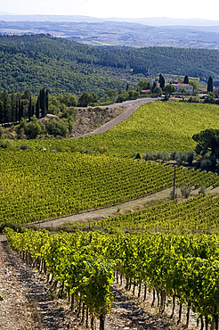 A view over vineyards in Chianti, Tuscany, Italy, Europe
