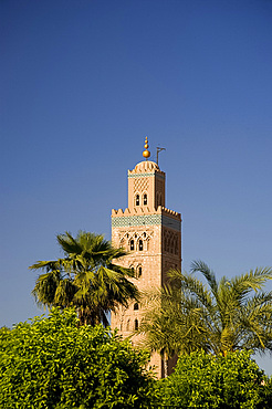 The minaret of the Koutoubia Mosque surrounded by palm trees in Marrakech, Morocco, North Africa, Africa