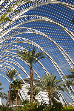 Palm trees in L'Umbracle in the City of Arts and Sciences in Valencia, Valenciana, Spain, Europe