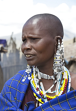 A Masai woman wearing elaborate beaded jewelry in the Ngorongoro Conservation Area, Tanzania, East Africa, Africa