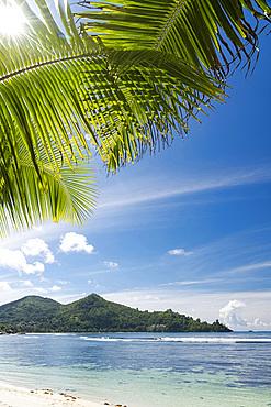 The sun shining through palm leaves at Baie Lazar, Mahe, Seychelles, Indian Ocean, Africa