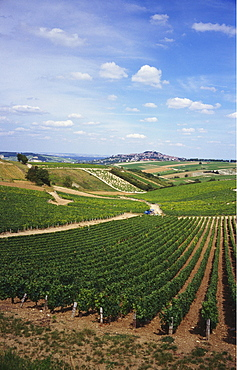 Vineyards, Loire Valley and Sancerre in the Distance, France