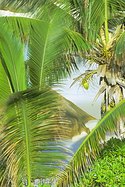 Palms, coconuts and rock, Anse Patates, La Digue Island, Seychelles, Indian Ocean, Africa