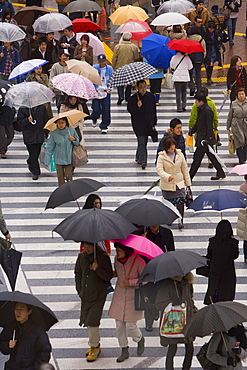 Pedestrians crossing a busy intersection with umbrellas on a rainy day, Shibuya, Tokyo, Honshu, Japan, Asia