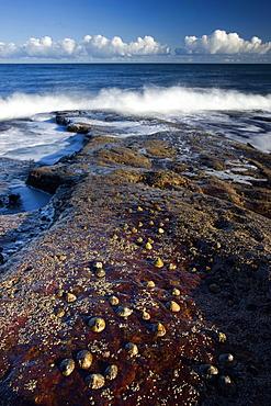 Waves crashing on rocks covered in barnacles, Cullernose Bay, near Alnwick, Northumberland, England, United Kingdom, Europe