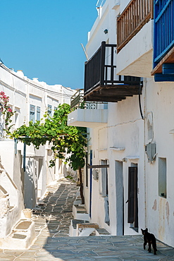 Black cat wandering down an alleyway through traditional white Greek houses, Kastro Village, Sifnos, Cyclades, Greek Islands, Greece, Europe