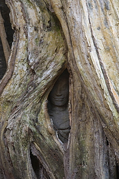 Ta Prohm Kei temple, Angkor Thom, Angkor, UNESCO World Heritage Site, Siem Reap, Cambodia, Indochina, Southeast Asia, Asia