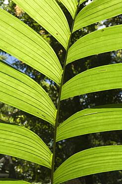 Rainforest vegitation, Hanging Bridges walk, Arenal, Costa Rica