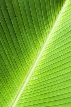 Leaf, Arenal area, Costa Rica