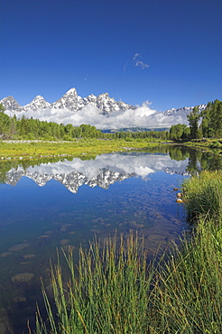 The Cathedral Group of Mount Teewinot, Mount Owen and Grand Teton reflected in the Snake River, Schwabacher's Landing, Grand Teton National Park, Wyoming, United States of America, North America