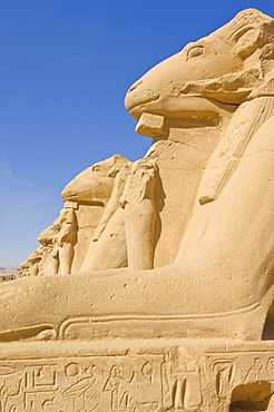 Row of sphinx with ram heads at the great Temple at Karnak, near Luxor, Thebes, UNESCO World Heritage Site, Egypt, North Africa, Africa