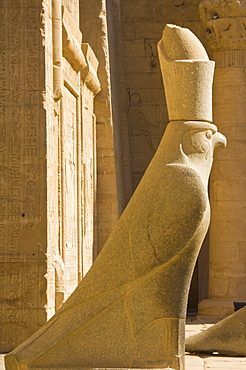 Statue of Horus the falcon outside the doorway to the sandstone Temple of Horus at Edfu, Egypt, North Africa, Africa