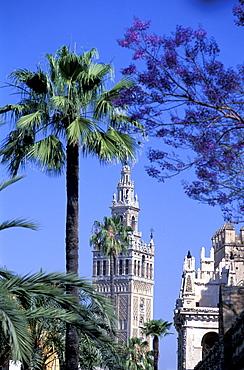 Spain, Andaloucia, Sevilla, La Giralda Tower & Palme At Fore