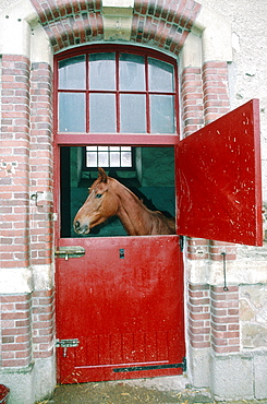 France, Normandy, Manche (50), Saintlo, The National Stud Farm, Stallion Horse In His Box