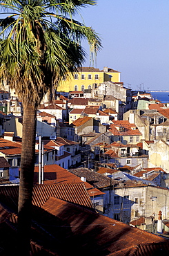Portugal, Lisbon, Overview On The City (Alfama) From St Georges Castle  Road (Castello Sao Jorge), Palme At Fore