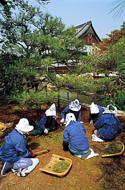 Japan, Kyoto, Nijo Temple Gardeners