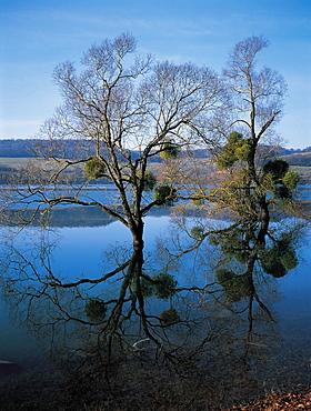 River Yonne In Winter, Burgundy, France