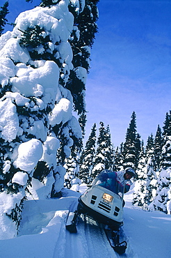 Canada, Quebec In Winter, Otish Mountains, Snowmobile Raid, Pines Forest