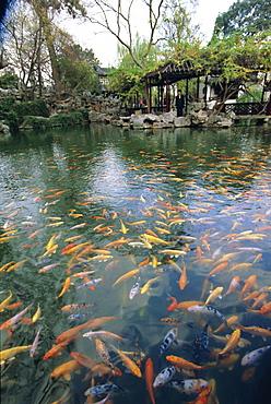 Carp pond, Suzhou, China