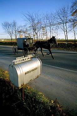 Amish farm, Lancaster, Pennsylvania, United States of America, North America