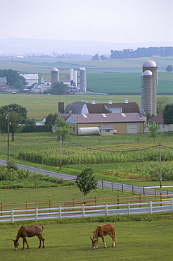 Amish country, Pennsylvania, United States of America, North America
