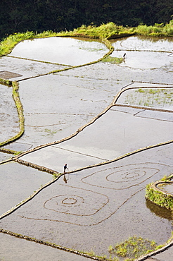 An elderly woman working in water filled rice terraces with fish traps, Tulgao Village near Tinglayan, The Cordillera Mountains, Kalinga Province, Luzon Island, Philippines, Southeast Asia, Asia