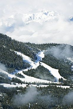 Tree lined ski slopes, Whistler mountain resort, venue of the 2010 Winter Olympic Games, British Columbia, Canada, North America