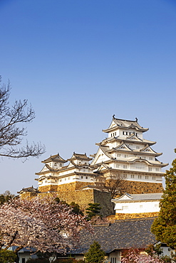 Cherry blossom at the 17th century Himeji Castle, UNESCO World Heritage Site, Hyogo Prefecture, Honshu, Japan, Asia
