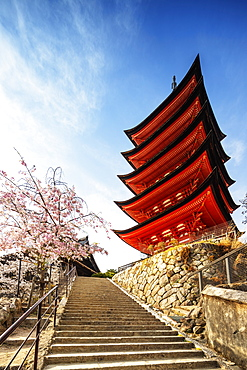 Cherry blossom at Komyoin five story pagoda, UNESCO World Heritage Site, Miyajima Island, Hiroshima Prefecture, Honshu, Japan, Asia