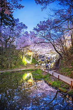 Cherry blossom at Takato castle, Takato, Nagano Prefecture, Honshu, Japan, Asia