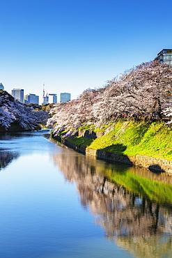Spring cherry blossom, Chidorigafuchi, Chiyoda ku, Tokyo, Japan, Asia