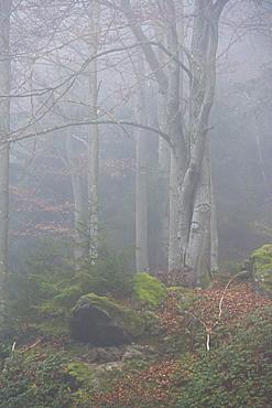 Bavarian Forest National Park, Bavaria, Germany, Europe
