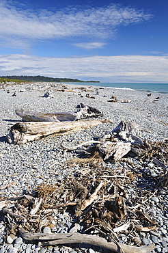 Driftwood, Gillespies Beach, Westland Tai Poutini National Park, UNESCO World Heritage Site, West Coast, South Island, New Zealand, Pacific
