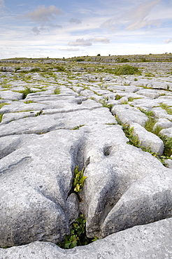 Limestone pavement, The Burren, County Clare, Munster, Republic of Ireland, Europe