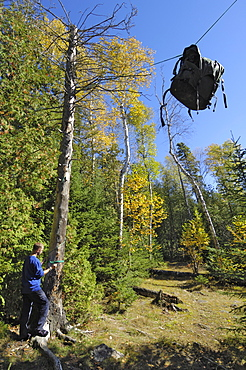 Bear Hang, food bag hung between two trees to protect it from bears, Boundary Waters Canoe Area Wilderness, Superior National Forest, Minnesota, United States of America, North America