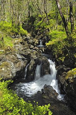 Waterfalls at Wood of Cree, near Newton Stewart, Dumfries and Galloway, Scotland, United Kingdom, Europe