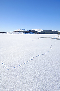 Clatteringshaws Loch, frozen and covered in winter snow, Dumfries & Galloway, Scotland