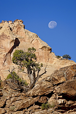 Moon over rock formations and juniper, Grand Staircase-Escalante National Monument, Utah, United States of America, North America