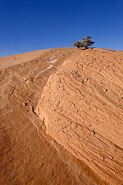 Tiny juniper atop a red sandstone hill, Grand Staircase-Escalante National Monument, Utah, United States of America, North America