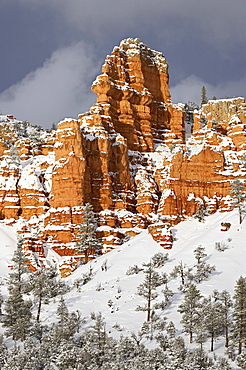Red rock formations, Red Canyon, Dixie National Forest, Utah, United States of America, North America
