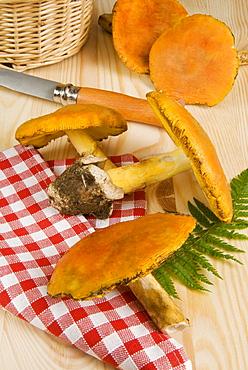 Caesar's mushrooms (Amanita caesarea), Italy, Europe