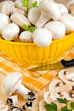 White button mushrooms (Agaricus bisporus), Champignon, Italy, Europe