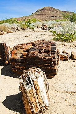 Close-up of fossilised tree trunks, Petrified Forest, Damaraland, Kunene Region, Namibia, Africa