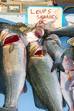 Sunday Fish Market at Vieux Port, Marseille, Bouches du Rhone, Provence-Alpes-Cote-d'Azur, France, Europe