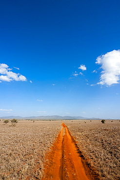 Trail in the Savannah, Tsavo West National Park, Kenya, East Africa, Africa