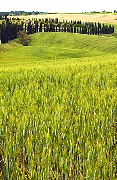 Crete Senesi area, Siena Province, Tuscany, Italy, Europe